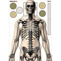 Tarcza szkielet